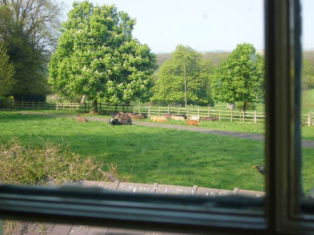 View from back window of the cottage