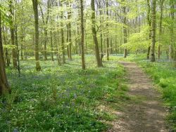 A springtime walk in Rigsby Wood