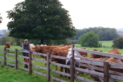 Bill with cattle